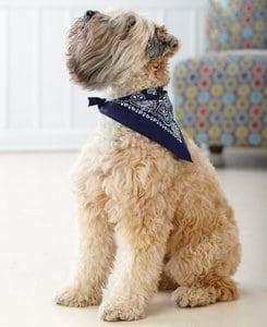 LAT LA3905 - Doggie Skins Bandana